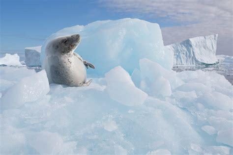 silversea cruises antarctica 6 silversea antarctica expedition cruisescapes