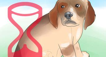 how to teach a puppy its name how to a to respond to voice commands 13 steps