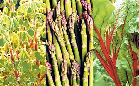 Perennial Vegetables Plant Once And Eat Always Telegraph Perennial Vegetable Garden
