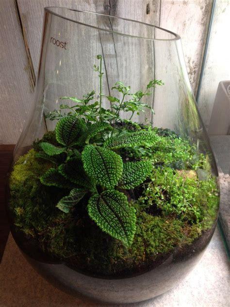 Akar Moss Bonsai By Aqua City 25 best ideas about tropical terrariums on