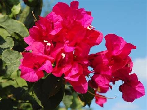 sumptuous tropical flowers diy