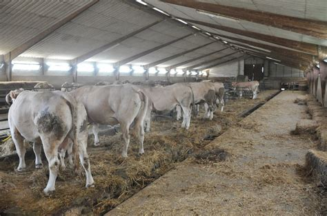 Cow Sheds by Desk Work