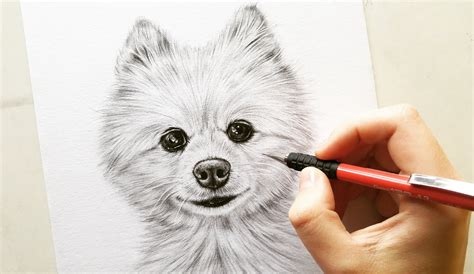 how to draw a pomeranian puppy drawing pomeranian cotton pet portrait leontine vliet