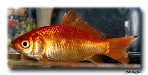 imagenes animales con escamas nombre de peces con escamas imagui