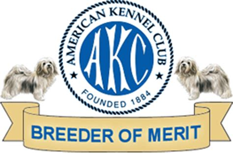 akc havanese breeders of merit 1 akc havanese puppies arizona breeder r havanese