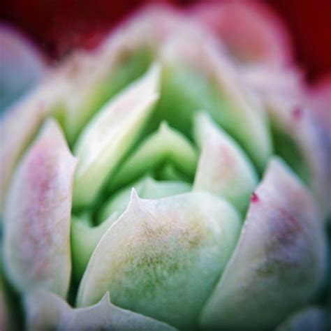 facts about succulents facts about succulents things you don t know about