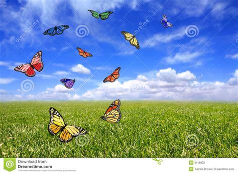 imagenes de mariposas que vuelan mariposas hermosas que vuelan libremente en un co