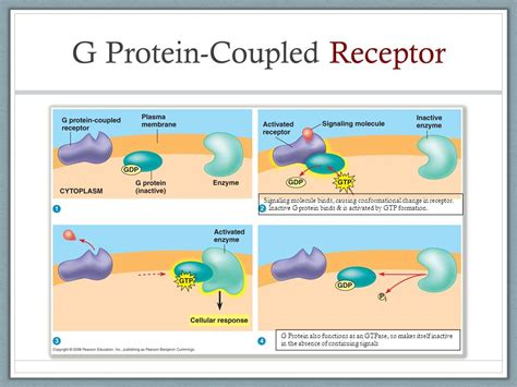 g protein coupled receptors function cell communication chapter ppt