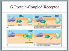 Cell Communication Chapter ppt download G Protein Coupled Receptors Diagram