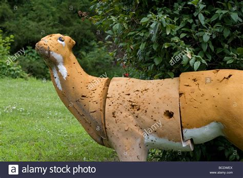 fake deer a fake deer that is a bow hunting target stock photo royalty free image 24891634 alamy