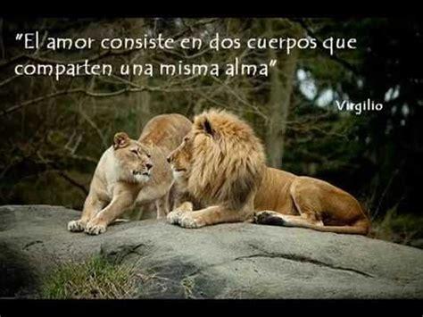 imagenes de leones haciendo el amor reflexiones sobre el amor leones youtube