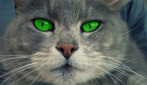 imagenes de ojos verdes de gatos fondo escritorio gato ojos verdes