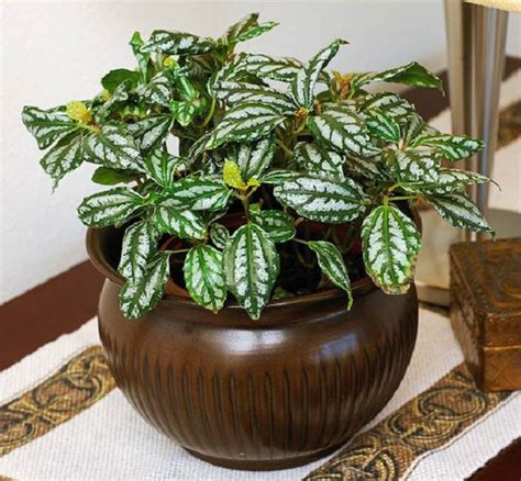 pretty indoor plants 29 most beautiful houseplants you never knew about
