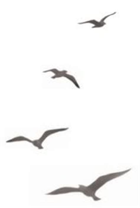 Seagull Silhouettes Vector 1275822 By Aslantopcu08 On Bird Silhouette Shoulder