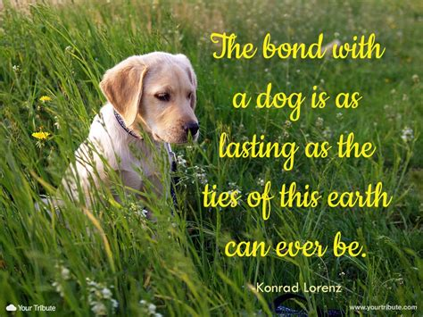 bonding with puppy pet loss quotes dogs quotes