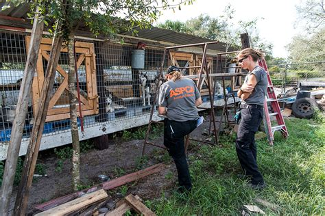 puppy mills in florida update view new footage from our fl puppy mill raid aspca