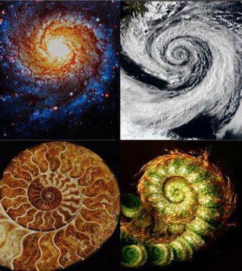 spiral pattern found in nature fibonacci sequence fibonacci sequence pinterest