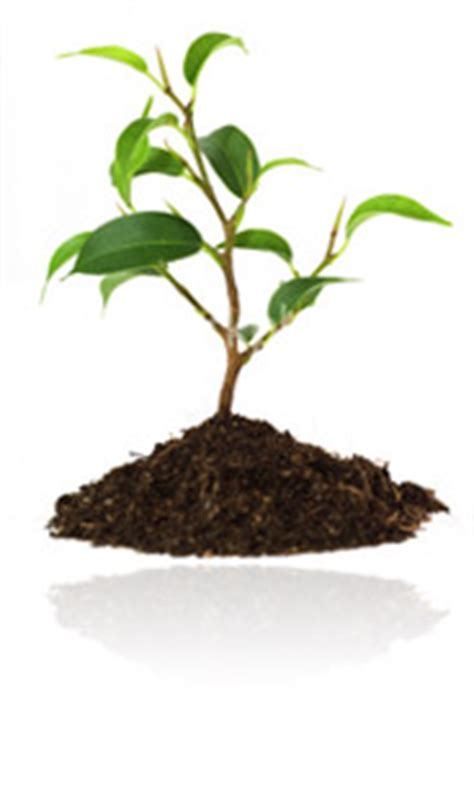 baby tree the growth of faith islamic discussions islamic forum