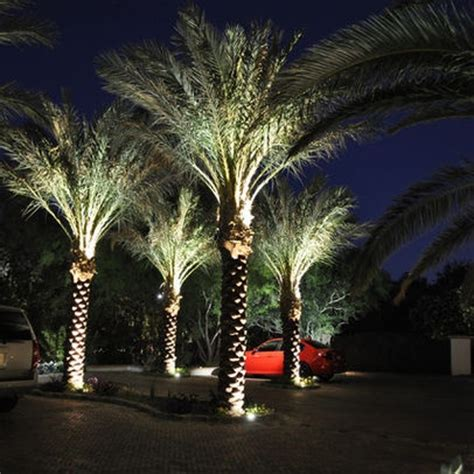 palm tree uplighting home landscape pinterest