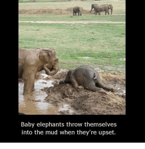 Baby Elephant Meme - funny baby elephants memes of 2017 on sizzle ass
