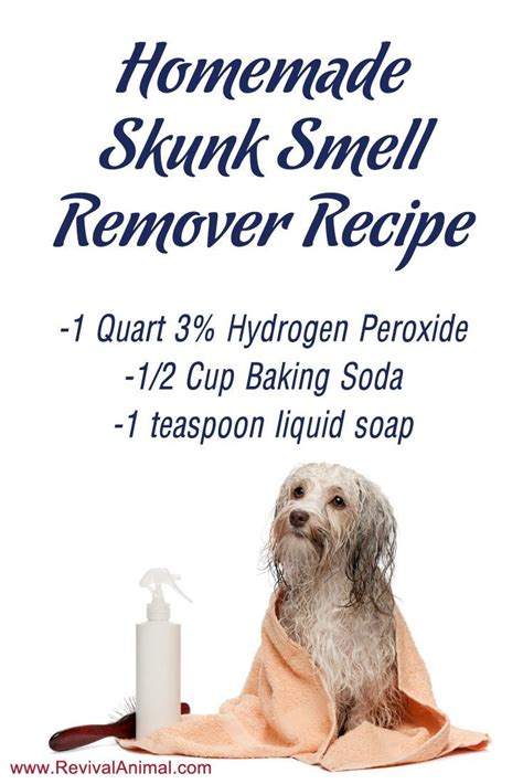 Recipe For Good Smelling Dog Shoo | 1000 ideas about skunk smell remover on pinterest skunk