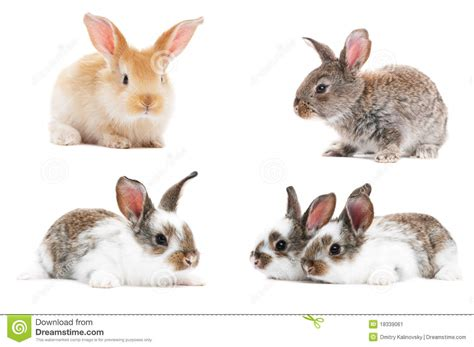 Light Brown Bunny by Set Of Baby Bunny Rabbits Stock Image Image 18339061