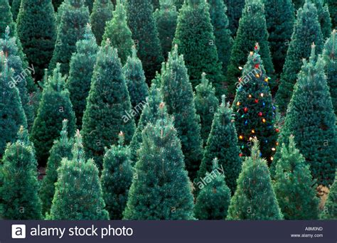 usa idaho christmas tree farm with one lighted christmas