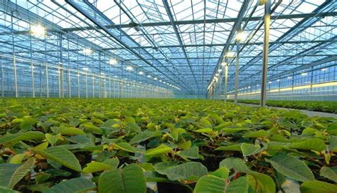 greenhouses advanced technology for protected horticulture books types of greenhouses by usage green home gnome