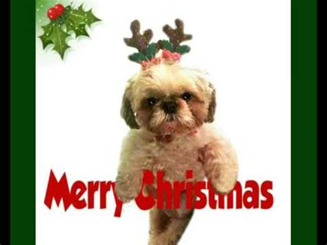 cute dog  merry christmas youtube