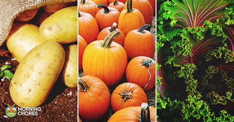 Delectable Yet Unedible Fruits And Vegetables by 25 Delicious Fall Vegetables You Can Introduce To Your Garden