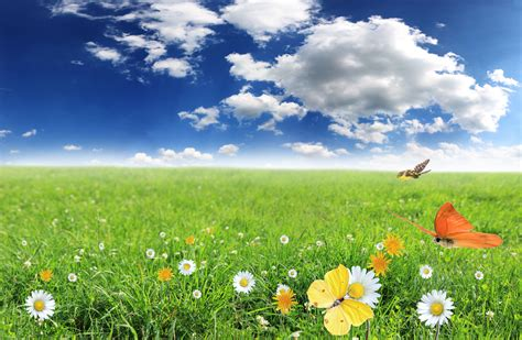 green grass landscape 4 photosfine