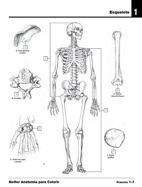 2010 e sle netter atlas de anatomia para colorir by elsevier sa 250 de issuu