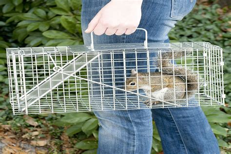 how to get a chipmunk out of your house how to get a chipmunk out of your house how to get a chipmunk out of your house 28