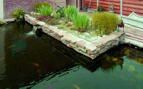 Algen Im Koiteich 1246 algen im koiteich algen im teich bek mpfen algenbek
