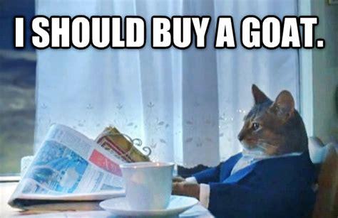 I Should Buy Meme - livememe com sophisticated cat