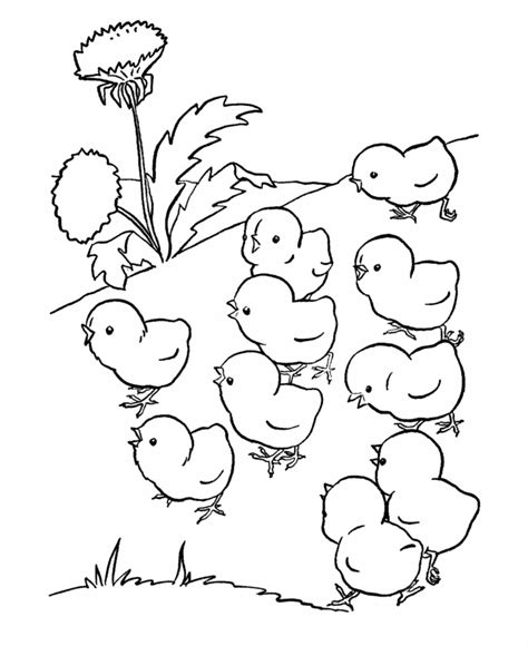 cute farm animals coloring pages easter chick coloring pages coloring home