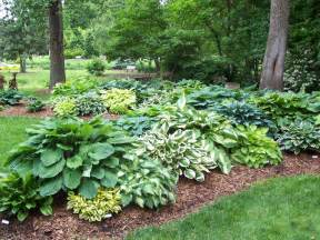 Hosta Garden Layout We Specialize In Soil Conditioner Green Roof Soil And Structural Soil