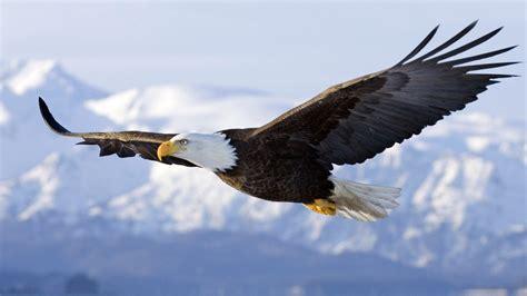 Fly As An Eagle 187 soar like an eagle