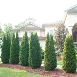Types Of Tall Evergreen Trees » Home Design 2017