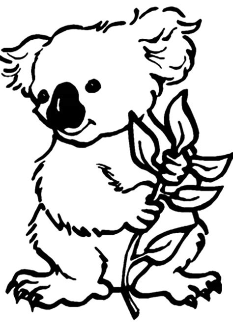 printable koala coloring pages koala outline cliparts co