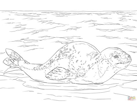 leopard seal coloring page free printable coloring pages