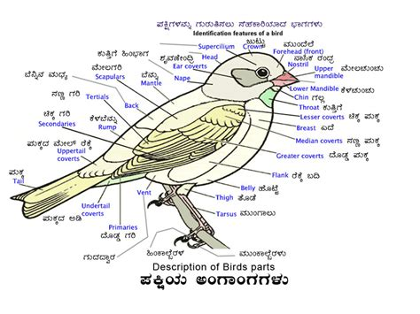 birds of western ghat discription of birds part in