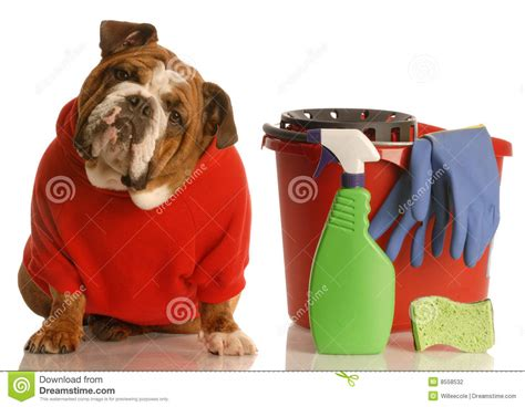 house training a puppy house training a puppy stock photography image 8558532