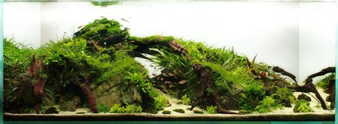 award winning aquascapes award winning aquascapes 28 images 24 best images