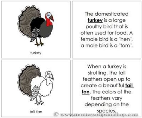 printable turkey parts turkey nomenclature book montessori parts of a turkey book
