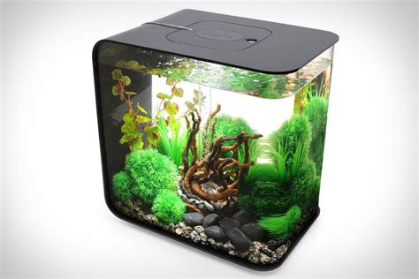 Desk Top Aquarium by The Fern And Mossery Desktop Aquarium For Office Or Home