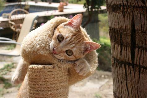 katze suchen ein zuhause estepona katzen tierschutz katzen suchen ein zuhause