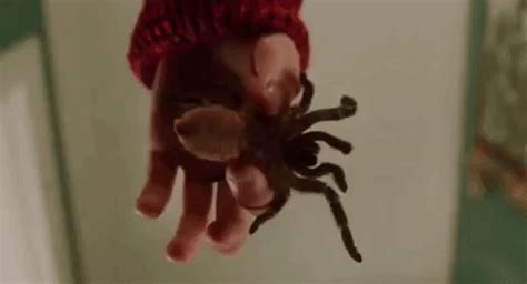 spider gifs find on giphy