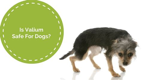 valium for dogs is valium safe for dogs smart owners