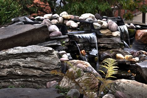 Lotus Garden Joplin Mo by Water Garden